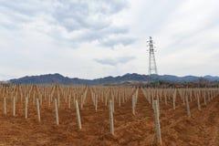 Виноградник в сельской местности Стоковая Фотография
