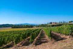 Виноградник в тосканской сельской местности Стоковая Фотография