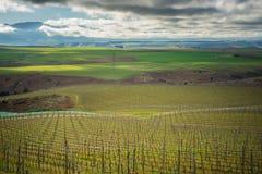 Виноградник в центральной зоне Otago Стоковые Изображения