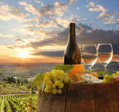 Виноградник в Chianti, Тоскане стоковое фото