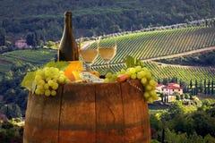 Виноградник в Chianti, Тоскане стоковое фото rf