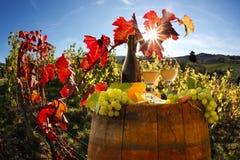 Виноградник в Chianti, Тоскане стоковая фотография rf
