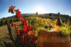 Виноградник в Chianti, Тоскане стоковые фото