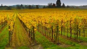 Виноградник в Napa Valley Стоковое Фото