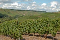 виноградник Германии Стоковые Фото