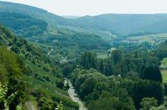виноградник Германии Стоковая Фотография