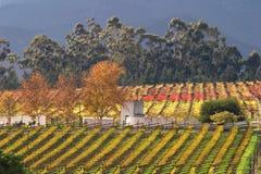 виноградник городка ландшафта плащи-накидк области Африки южный Стоковое Фото