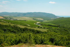 Виноградник лета Стоковое Фото