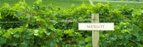 виноградник знака merlot Стоковая Фотография