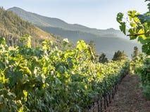 Виноградник и винодельня в сельском районе стоковые фотографии rf