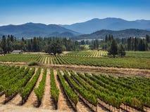 Виноградник и винодельня в сельском районе стоковые изображения