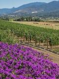 Виноградник и винодельня в сельском районе стоковые фото