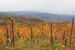 Виноградник и горы Стоковое фото RF