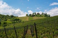Виноградник и молельня Стоковое Изображение RF