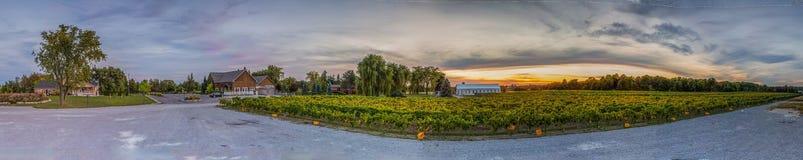Виноградник и небо Стоковые Фотографии RF