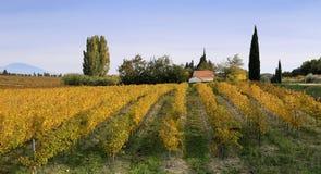 Виноградник и дом осени в Провансали Стоковые Фотографии RF