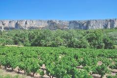 Виноградник, Коут de Провансаль, Франция стоковое изображение rf