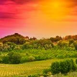 Виноградник на заходе солнца стоковая фотография rf