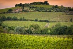 Виноградник около Montalcino, Тосканы, Италии Стоковые Фото