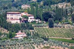 виноградник оливковых дерев Стоковые Изображения RF