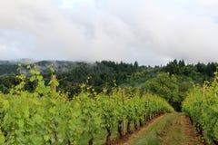 Виноградник Орегона весной Стоковое Фото