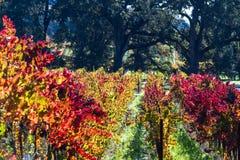виноградник осени цветастый стоковое фото