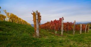 виноградник осени цветастый Стоковые Изображения RF
