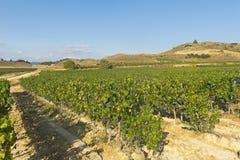виноградник природы ландшафта состава стоковая фотография rf
