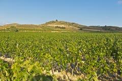 виноградник природы ландшафта состава стоковые изображения