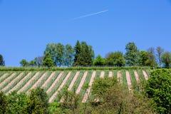Виноградник при голубое небо и самолет проходя мимо стоковые фото