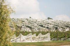 Виноградник северная Тасмания Стоковое Изображение