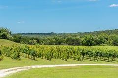 Виноградник страны холма Техаса Стоковая Фотография