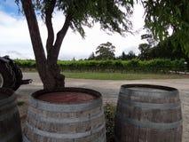 Виноградник с бочонками и виноградинами Стоковое Изображение