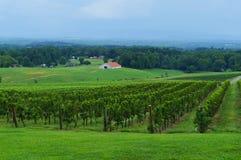 Виноградник с взглядом на долине Стоковые Фотографии RF