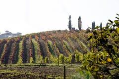 Виноградник с серым небом в Португалии стоковые изображения rf