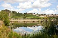 Виноградник Тасмания стоковое фото rf
