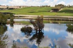 Виноградник Тасмания стоковое изображение rf