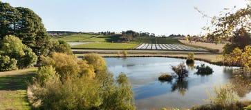 Виноградник Тасмания стоковая фотография