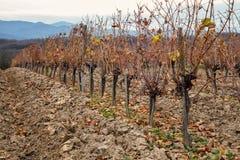 Виноградник холма в осени на сельской местности Стоковые Фото