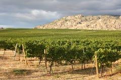 виноградник долины Британского Колумбии okanagan Стоковое Изображение RF