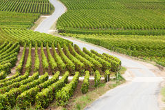 виноградник дороги Стоковое фото RF