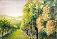 Виноградник иллюстрация штока