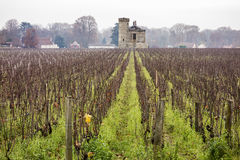 виноградник burgundy Стоковые Изображения RF