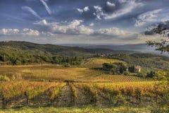 Виноградник Chianti Стоковое фото RF