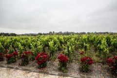 Виноградник d'estournel Clos замка, Святой Estephe, правый берег, Бордо, Франция Стоковая Фотография RF
