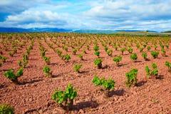 Виноградник La Rioja fields в пути St James стоковые изображения rf