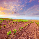 Виноградник La Rioja fields в пути St James стоковое изображение
