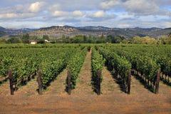 виноградник napa california Стоковое Фото