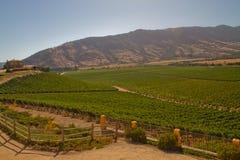 Виноградник Santa Cruz, Чили Стоковое Изображение