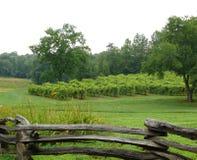 Виноградник VI стоковая фотография